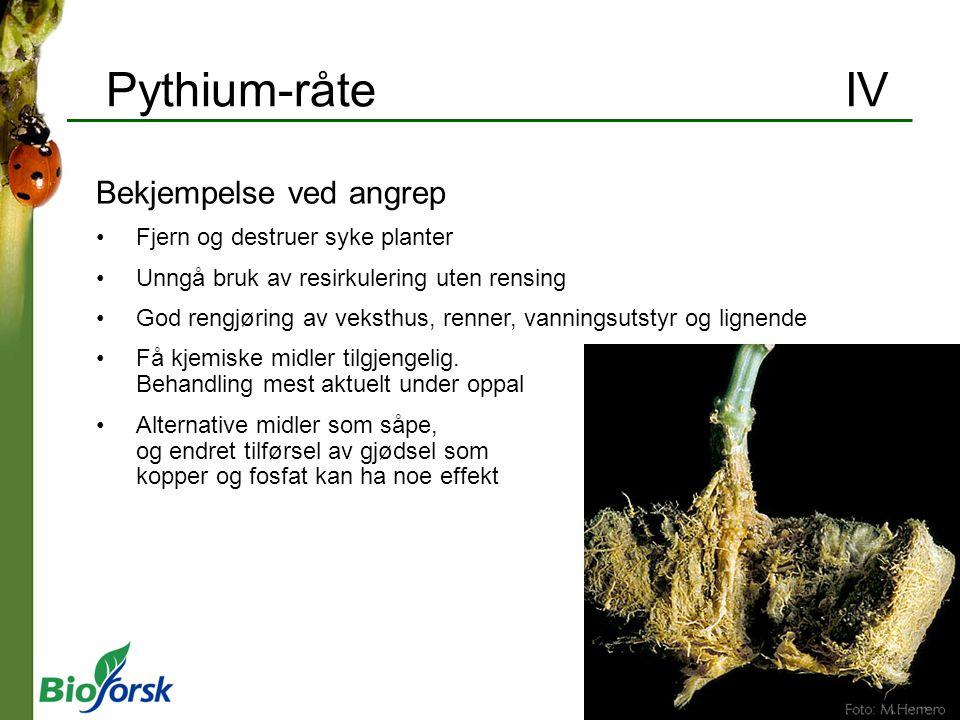 Pythium-råte IV Bekjempelse ved angrep Fjern og destruer syke planter