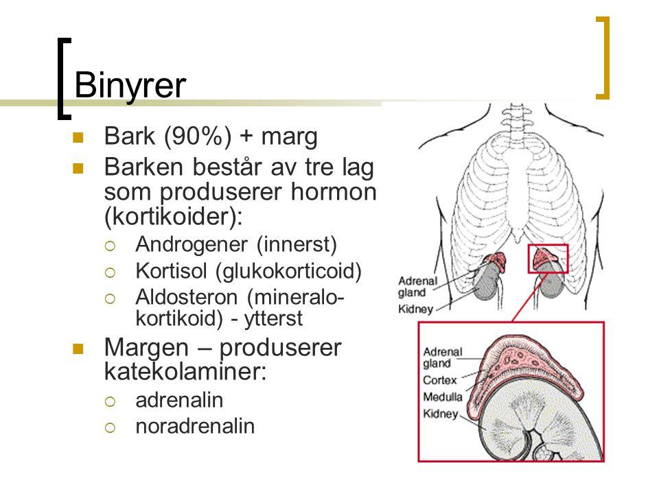 Binyrer Bark (90%) + marg. Barken består av tre lag som produserer hormon (kortikoider): Androgener (innerst)