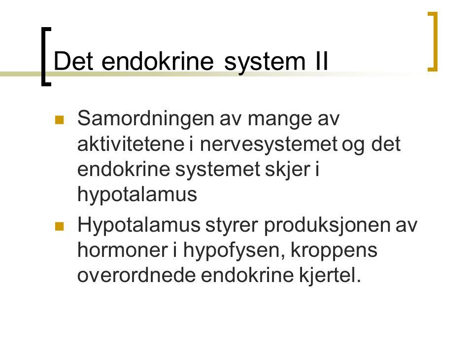 Det endokrine system II
