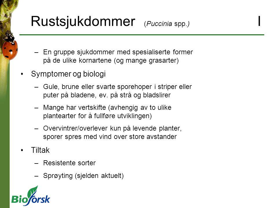 Rustsjukdommer (Puccinia spp.) I