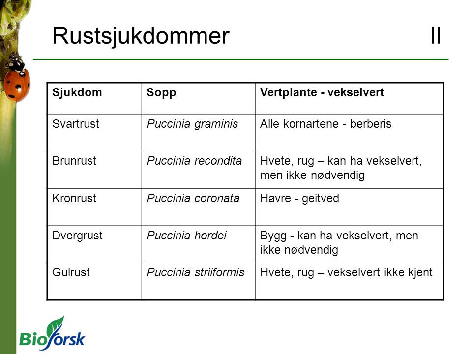 Rustsjukdommer II Sjukdom Sopp Vertplante - vekselvert Svartrust