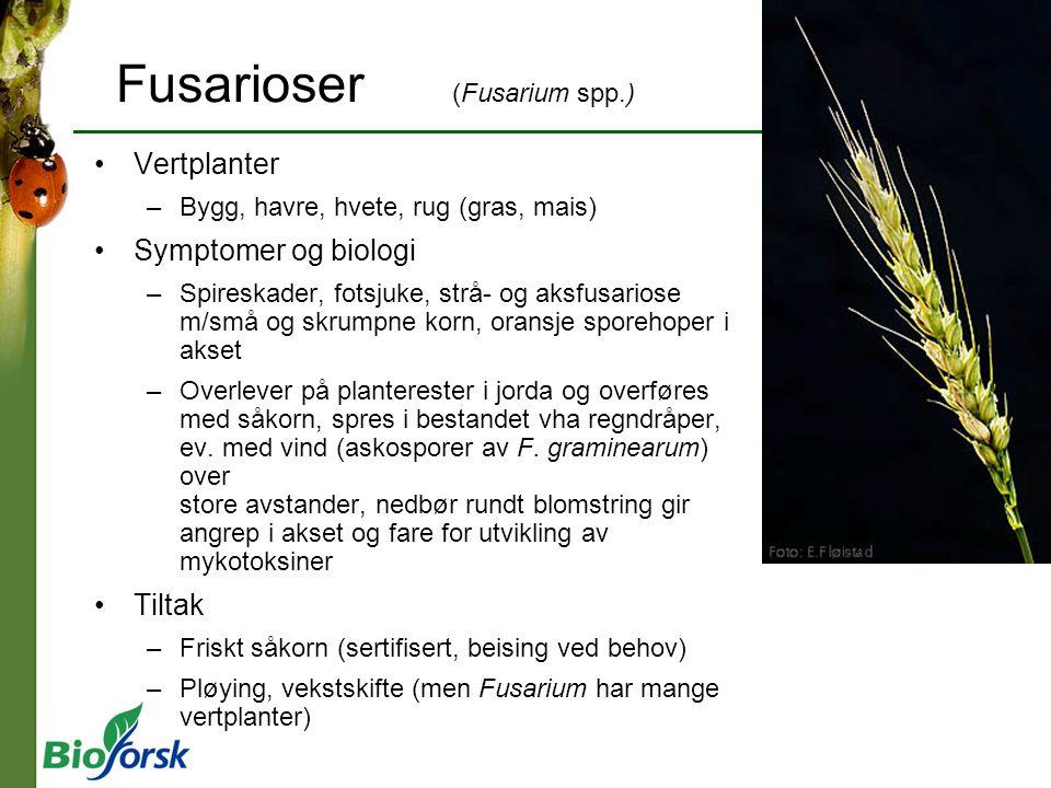 Fusarioser (Fusarium spp.)