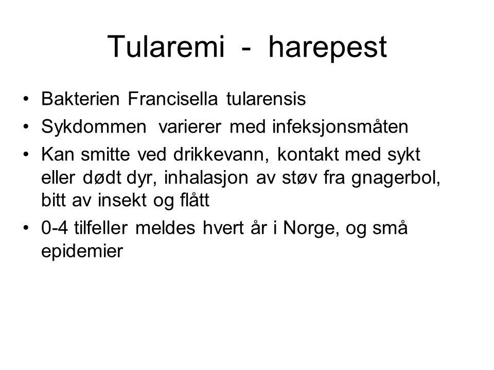 Tularemi - harepest Bakterien Francisella tularensis