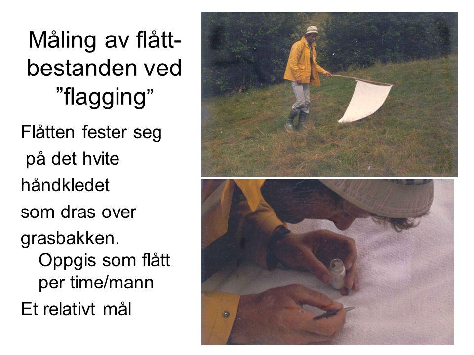 Måling av flått- bestanden ved flagging