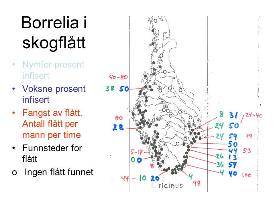 Borrelia i skogflått Nymfer prosent infisert Voksne prosent infisert
