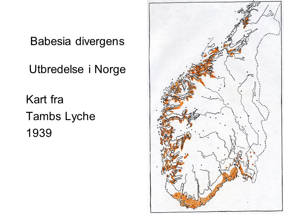 Babesia divergens Utbredelse i Norge