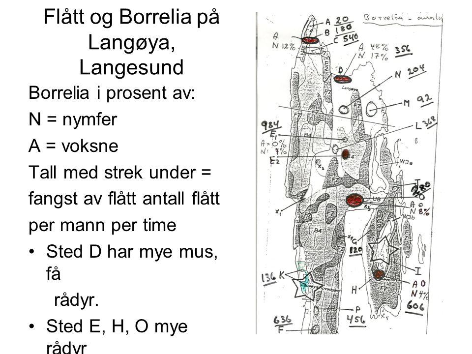 Flått og Borrelia på Langøya, Langesund