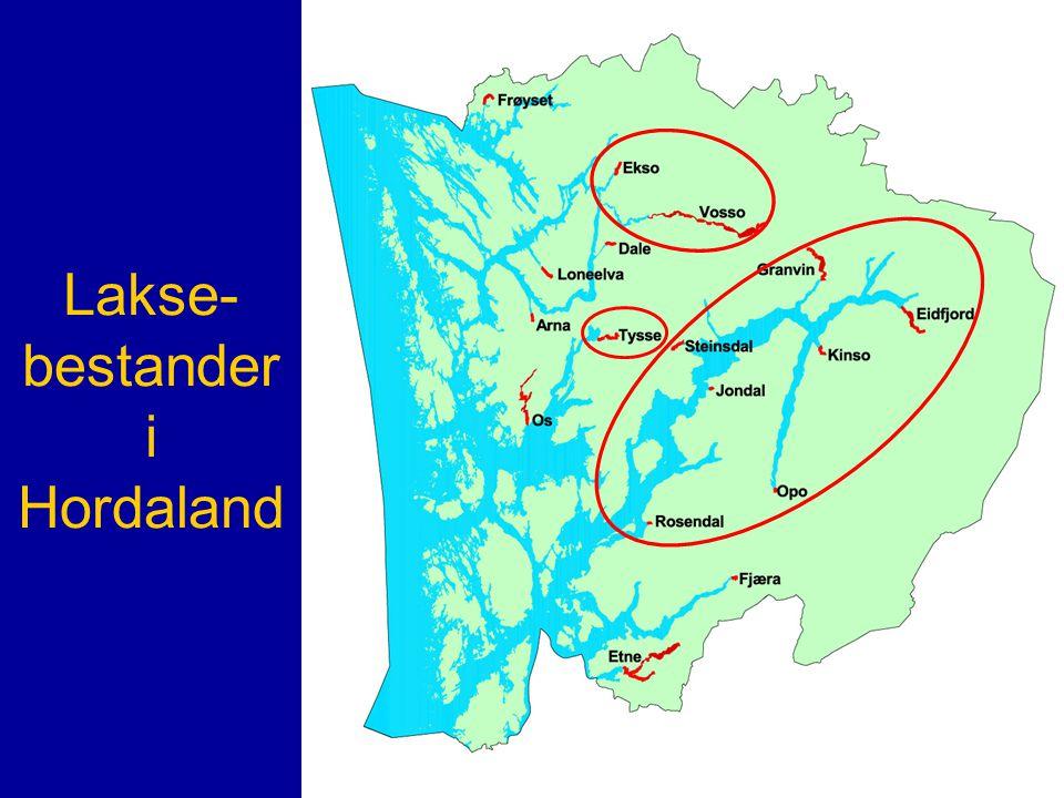 Lakse-bestander i Hordaland
