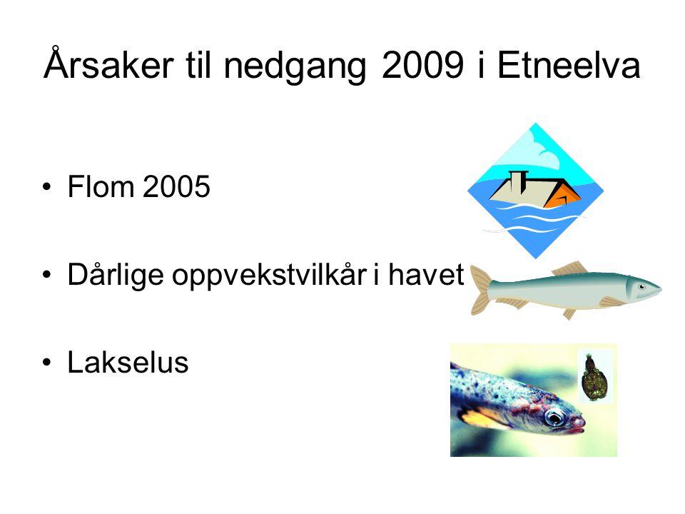 Årsaker til nedgang 2009 i Etneelva
