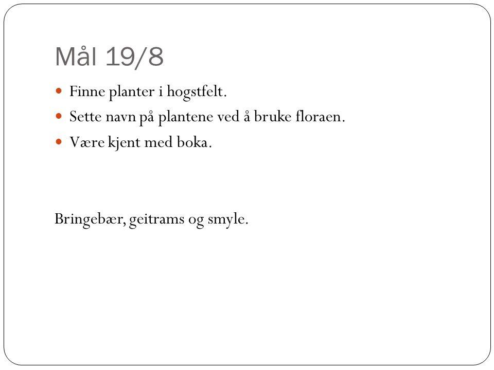 Mål 19/8 Finne planter i hogstfelt.