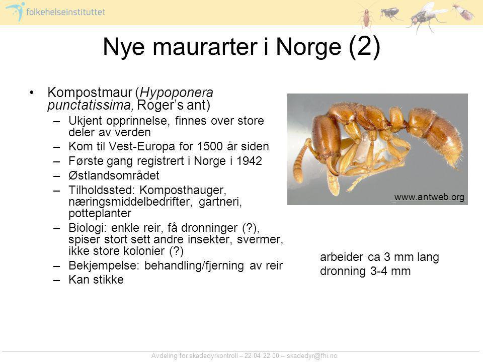 Nye maurarter i Norge (2)