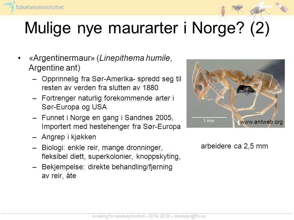 Mulige nye maurarter i Norge (2)
