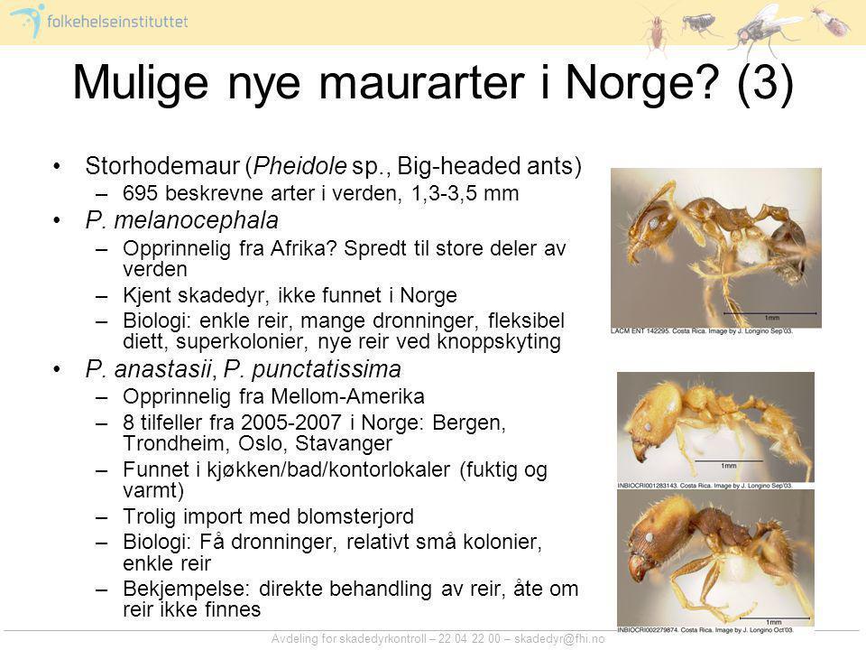 Mulige nye maurarter i Norge (3)