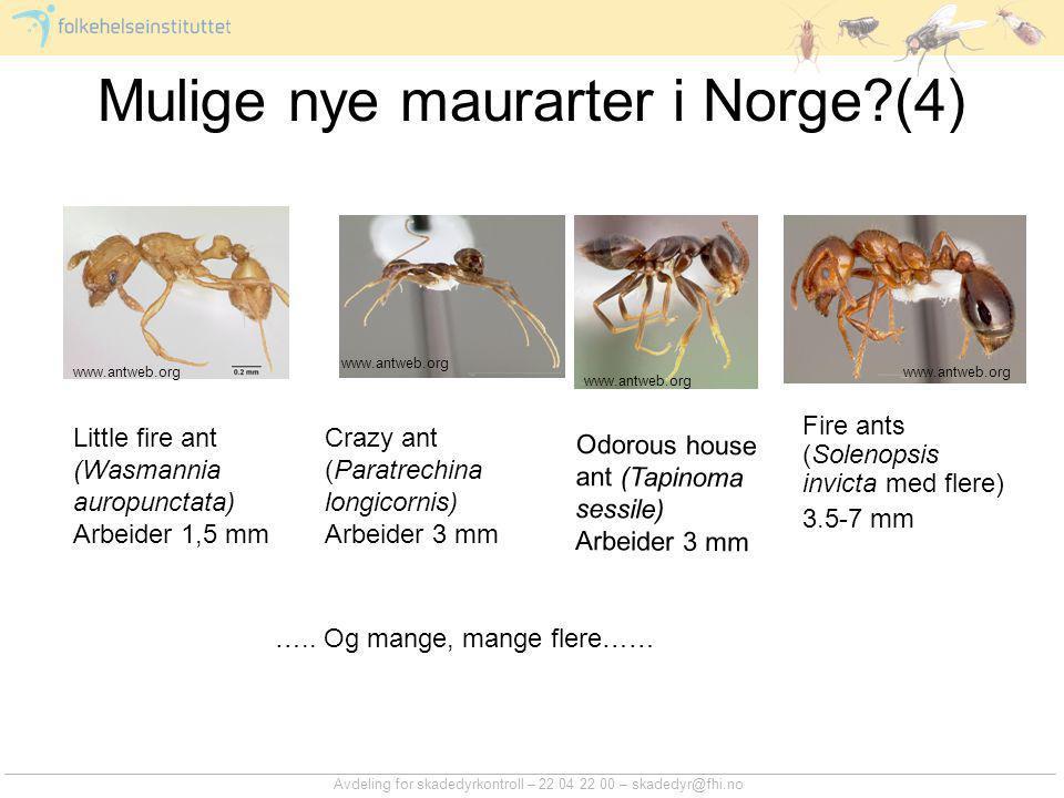 Mulige nye maurarter i Norge (4)