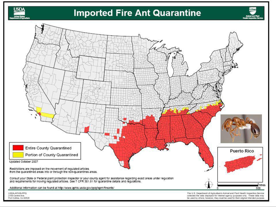 Den importerte maurarten/artene som kanskje har gitt mest trøbbel er red imported fire ant