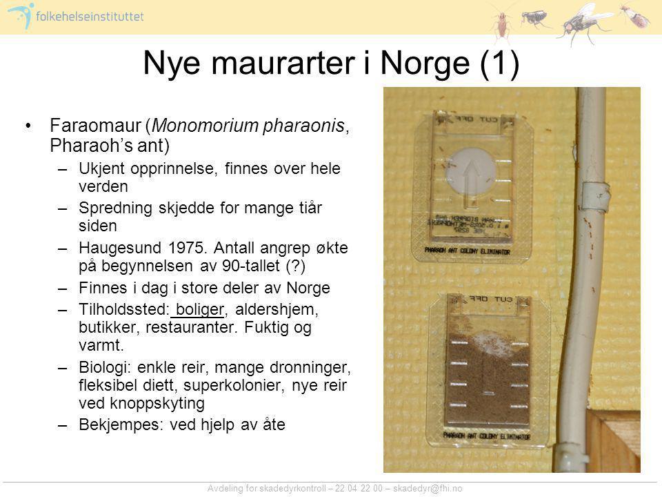 Nye maurarter i Norge (1)