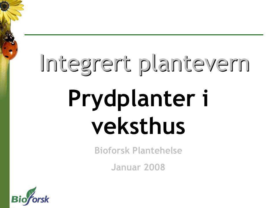 Prydplanter i veksthus Bioforsk Plantehelse Januar 2008