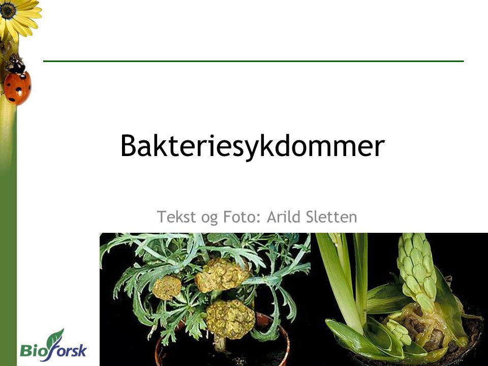 Tekst og Foto: Arild Sletten