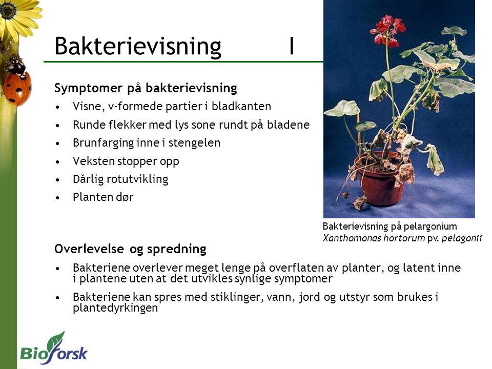 Bakterievisning I Symptomer på bakterievisning