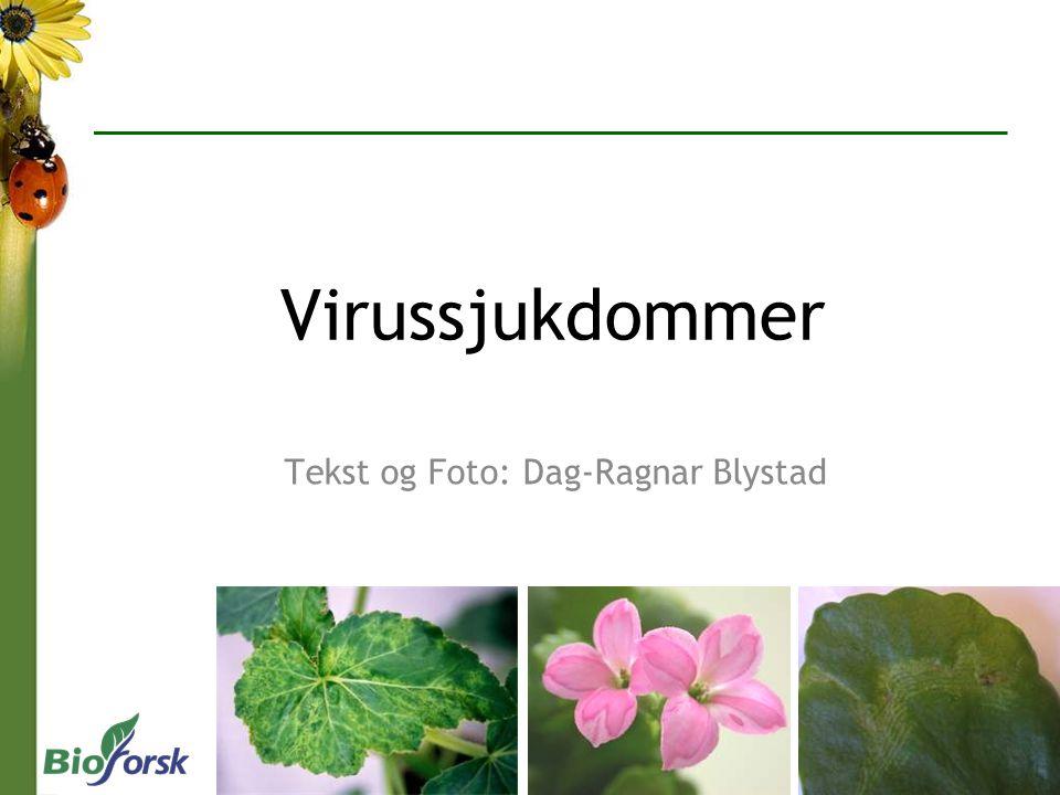 Tekst og Foto: Dag-Ragnar Blystad