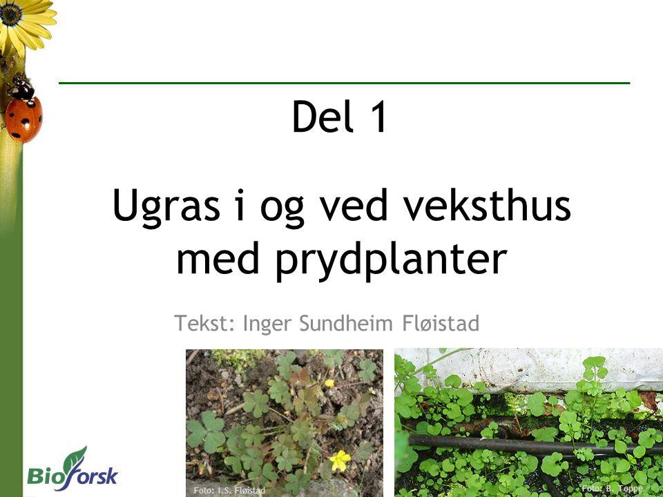 Tekst: Inger Sundheim Fløistad