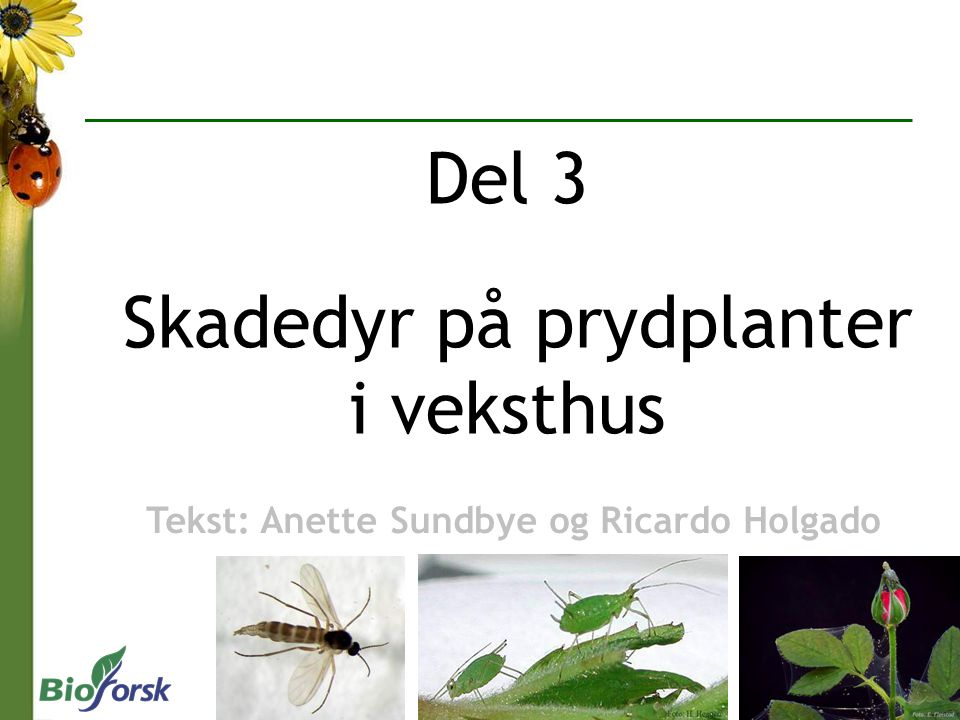 Del 3 Skadedyr på prydplanter i veksthus
