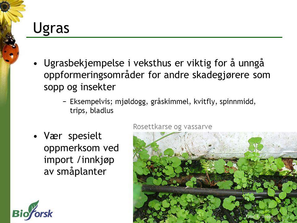 Ugras Ugrasbekjempelse i veksthus er viktig for å unngå oppformeringsområder for andre skadegjørere som sopp og insekter.