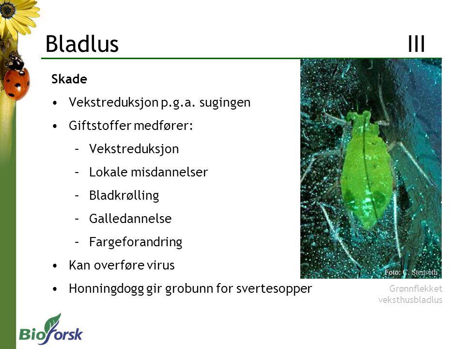 Bladlus III Skade Vekstreduksjon p.g.a. sugingen Giftstoffer medfører: