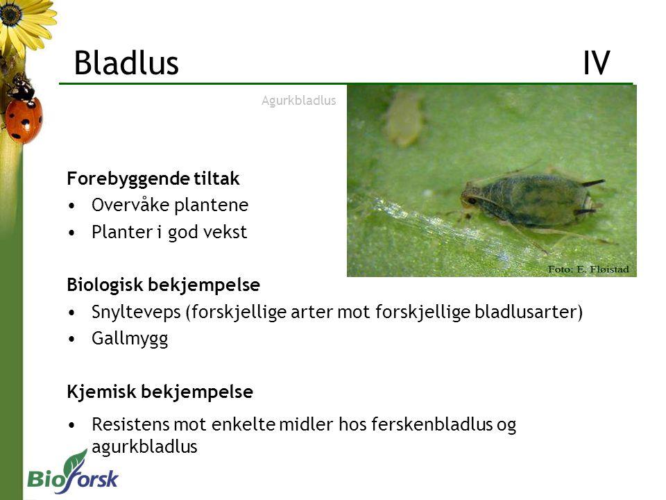 Bladlus IV Forebyggende tiltak Overvåke plantene Planter i god vekst