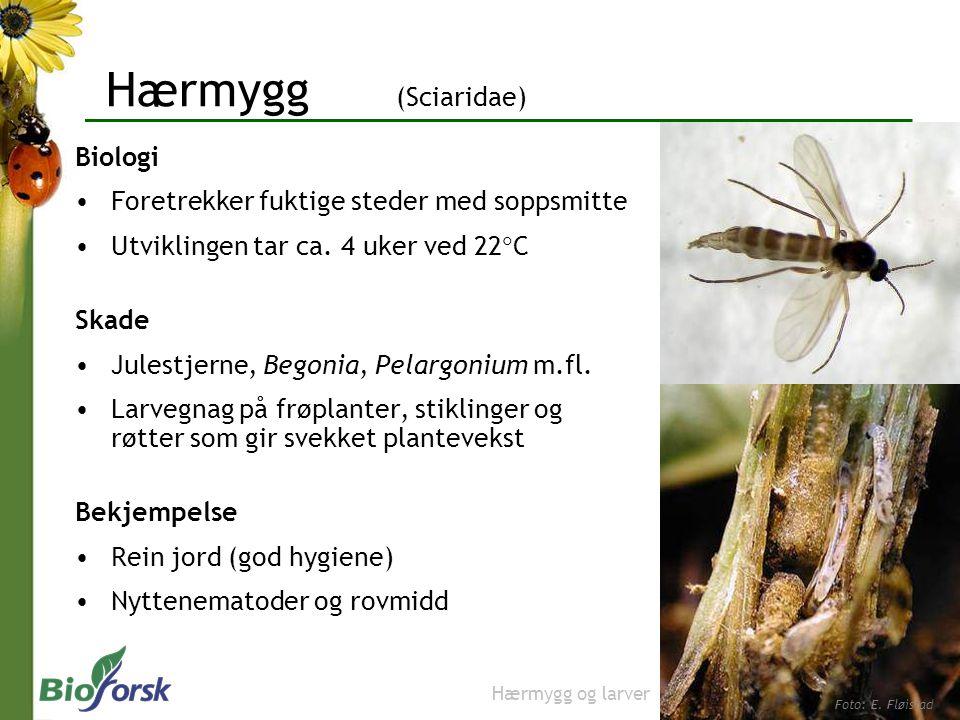 Hærmygg (Sciaridae) Biologi Foretrekker fuktige steder med soppsmitte