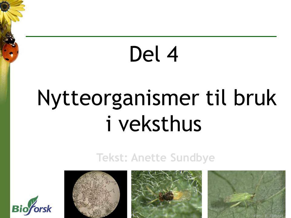 Del 4 Nytteorganismer til bruk i veksthus