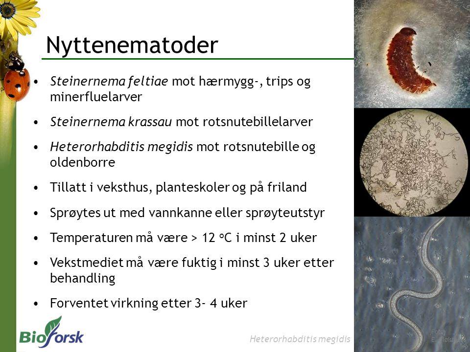 Nyttenematoder Steinernema feltiae mot hærmygg-, trips og minerfluelarver. Steinernema krassau mot rotsnutebillelarver.
