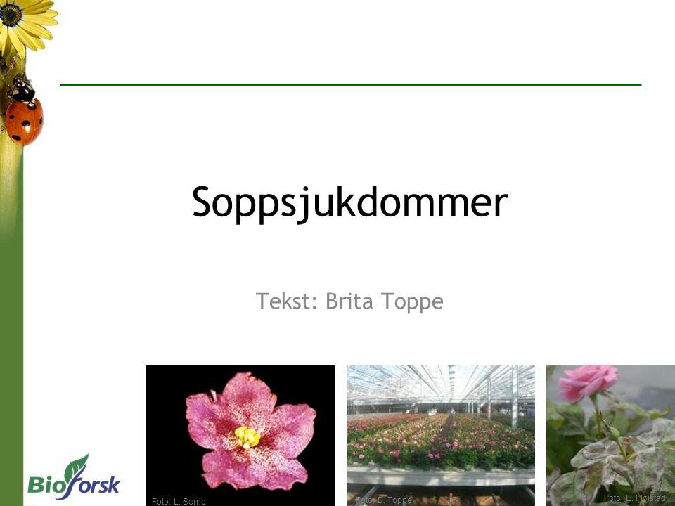 Soppsjukdommer Tekst: Brita Toppe 9 Foto: E. Fløistad Foto: L. Semb