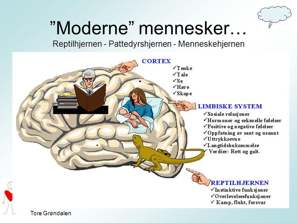 Moderne mennesker… Reptilhjernen - Pattedyrshjernen - Menneskehjernen