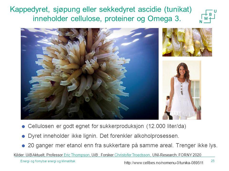 Kappedyret, sjøpung eller sekkedyret ascidie (tunikat)