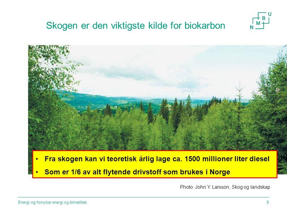 Skogen er den viktigste kilde for biokarbon