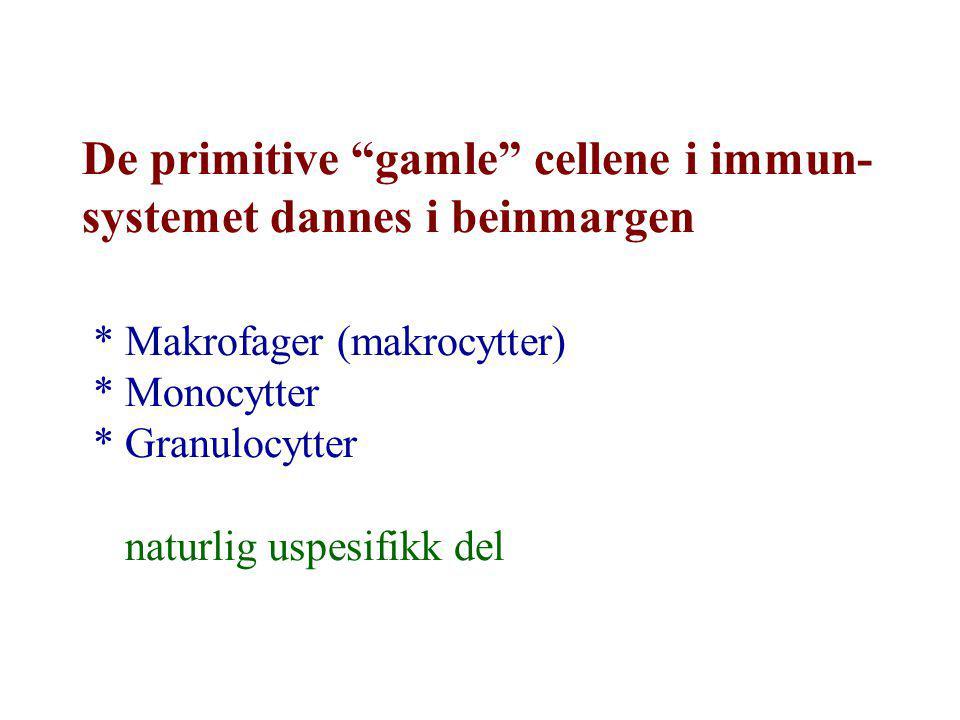 De primitive gamle cellene i immun-systemet dannes i beinmargen