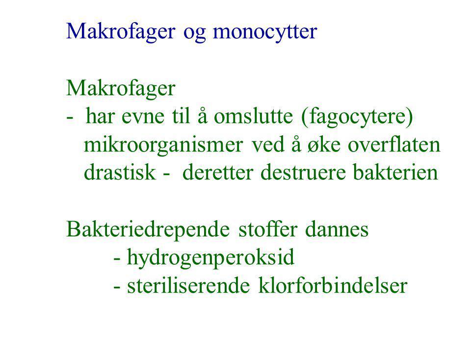 Makrofager og monocytter