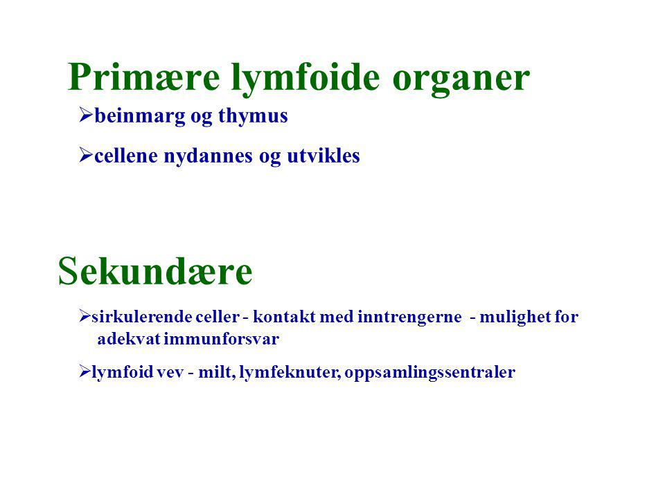 Primære lymfoide organer Sekundære