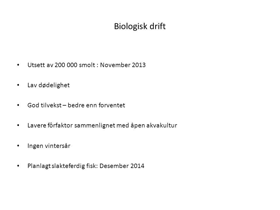 Biologisk drift Utsett av 200 000 smolt : November 2013 Lav dødelighet