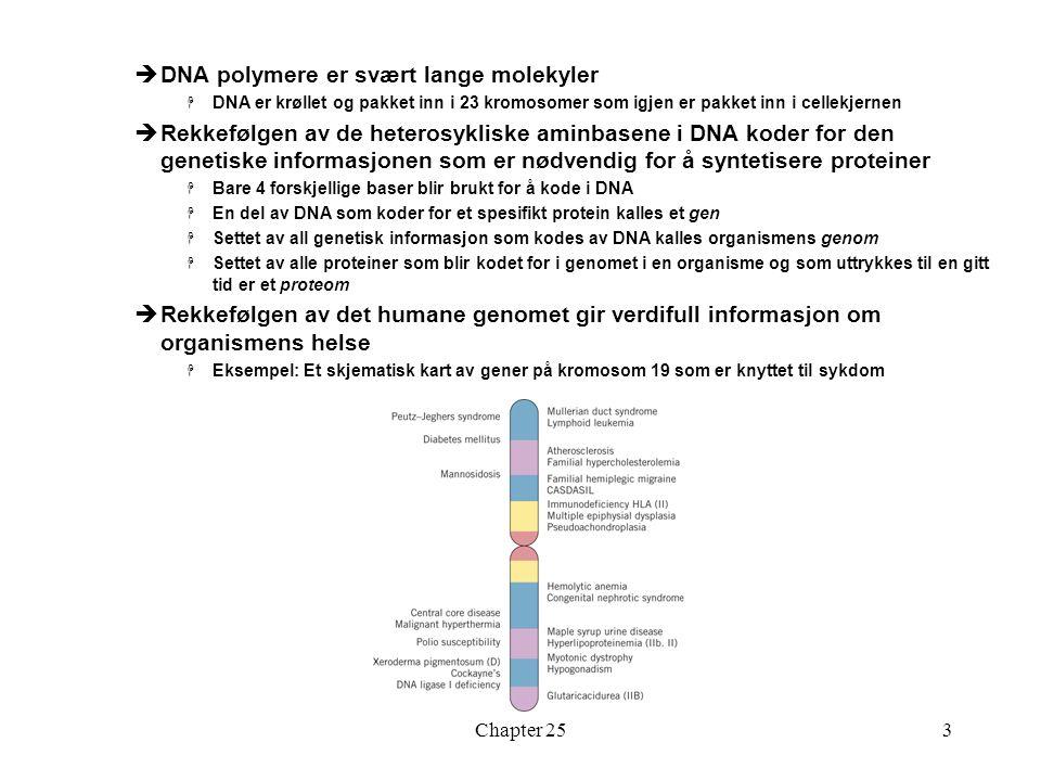 DNA polymere er svært lange molekyler