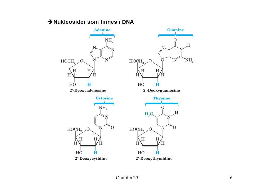 Nukleosider som finnes i DNA