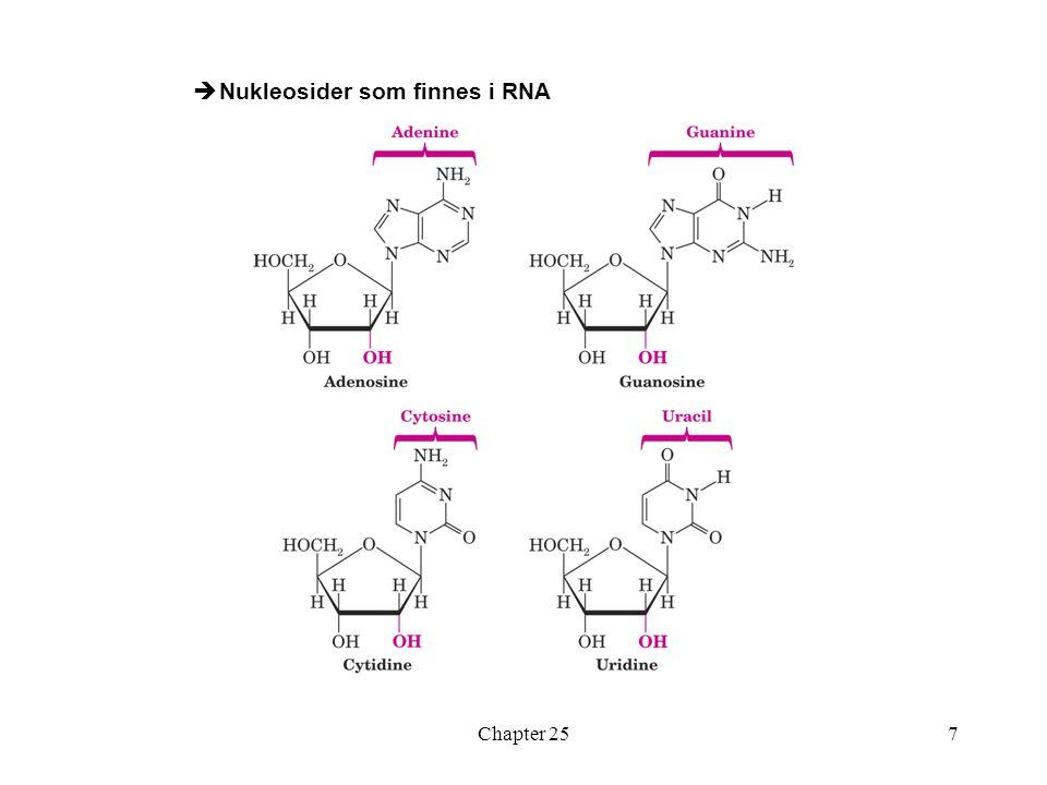 Nukleosider som finnes i RNA