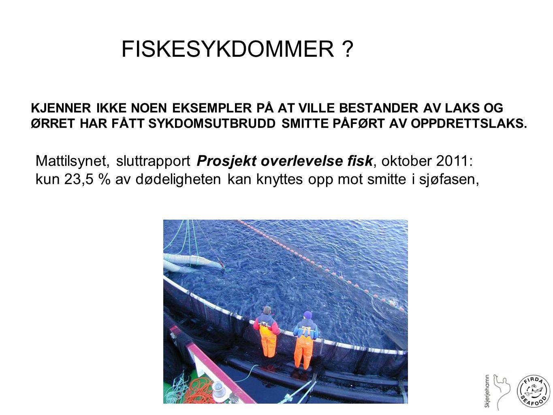 FISKESYKDOMMER KJENNER IKKE NOEN EKSEMPLER PÅ AT VILLE BESTANDER AV LAKS OG ØRRET HAR FÅTT SYKDOMSUTBRUDD SMITTE PÅFØRT AV OPPDRETTSLAKS.
