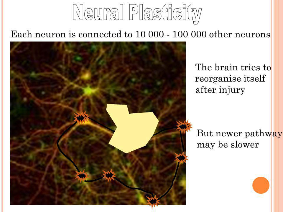 Neural Plasticity Each neuron is connected to 10 000 - 100 000 other neurons. The brain tries to. reorganise itself.