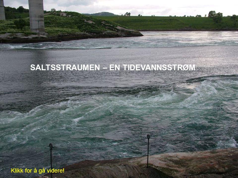 SALTSSTRAUMEN – EN TIDEVANNSSTRØM