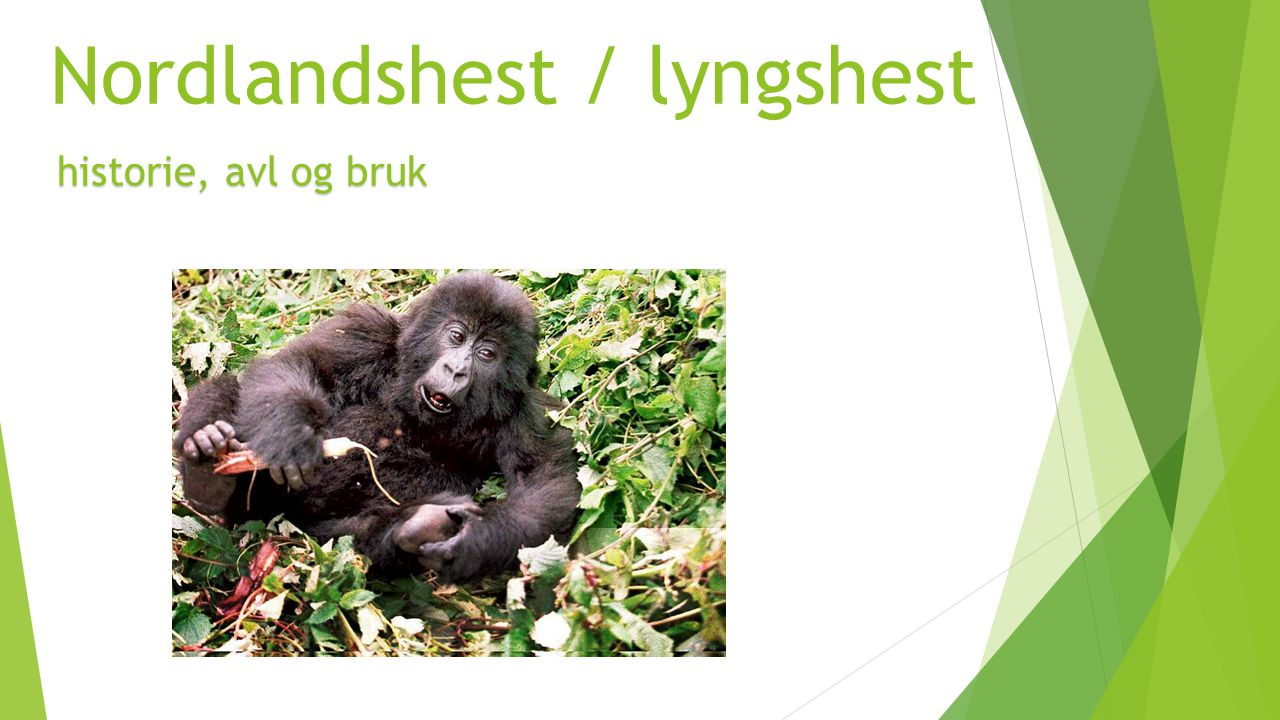 Nordlandshest / lyngshest