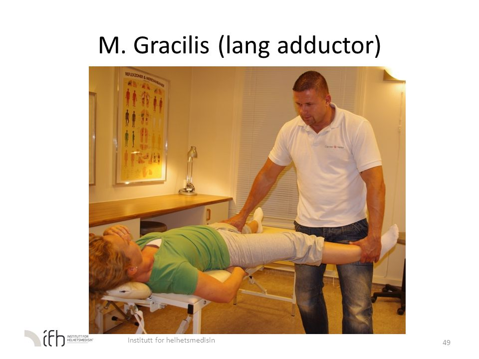 M. Gracilis (lang adductor)