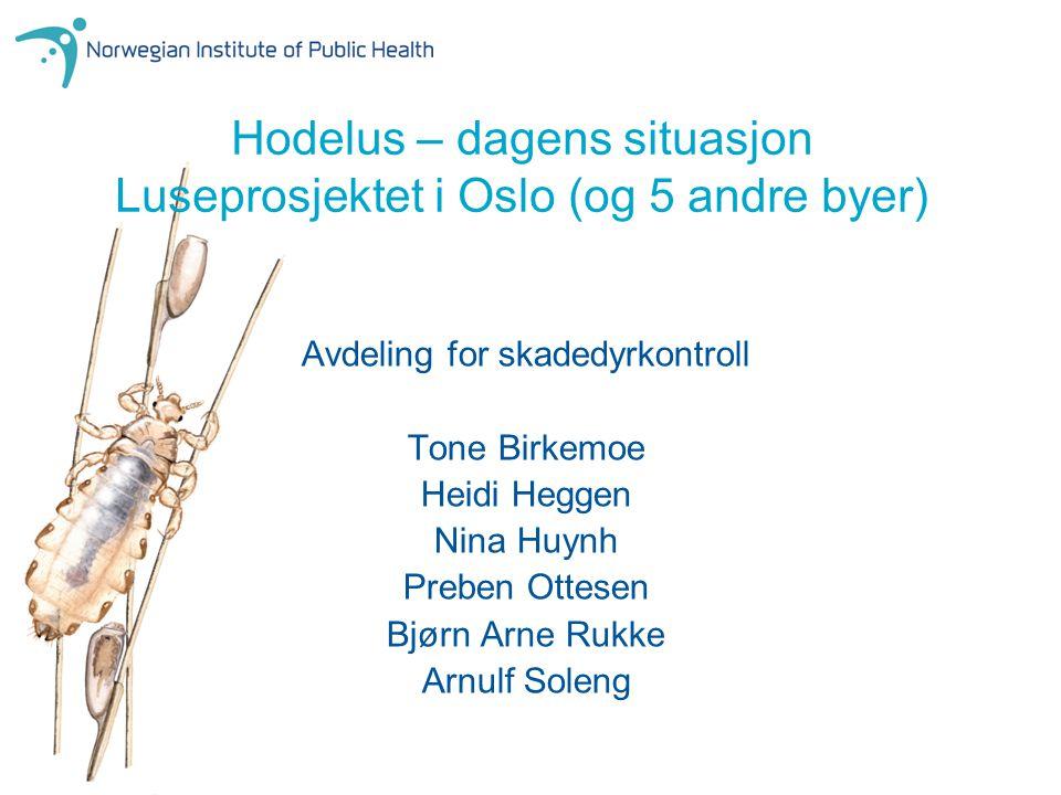 Hodelus – dagens situasjon Luseprosjektet i Oslo (og 5 andre byer)