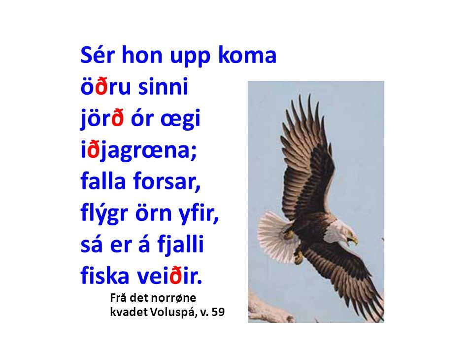 Sér hon upp koma öðru sinni jörð ór œgi iðjagrœna; falla forsar, flýgr örn yfir, sá er á fjalli fiska veiðir.